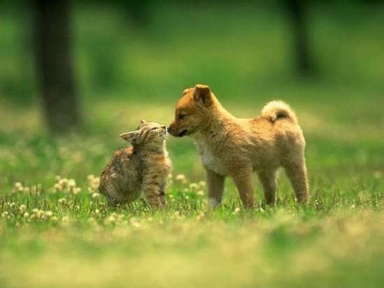 catdogcute