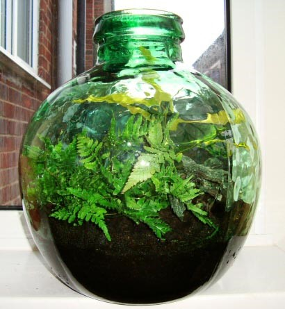 Upcycled Glass Bottle Terrarium
