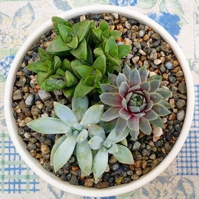 Succulent-2.jpg