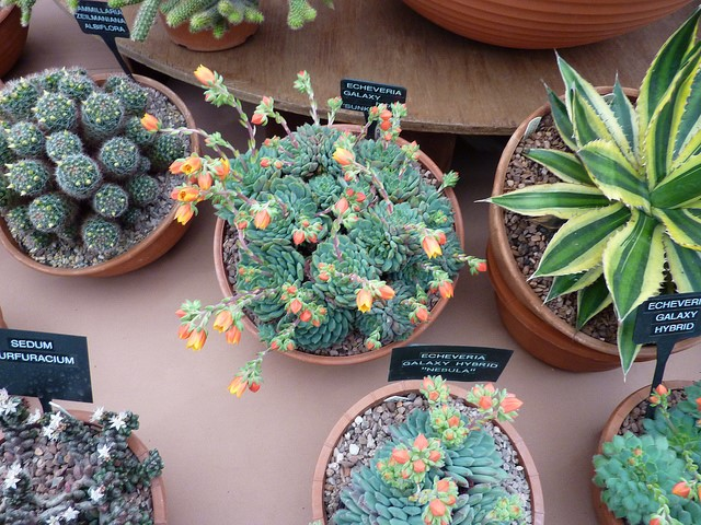 How to Choose the Right Succulent