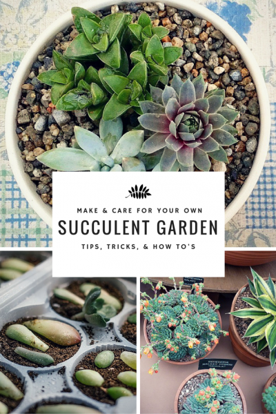 Learn how to care for a succulent garden