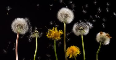 Cleaning Your Home to Reduce Allergies