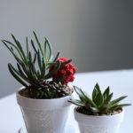 DIY Flower Pot Project