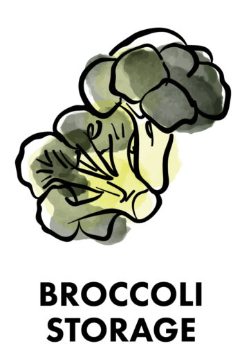 The Best Way to Store Vegetables: broccoli