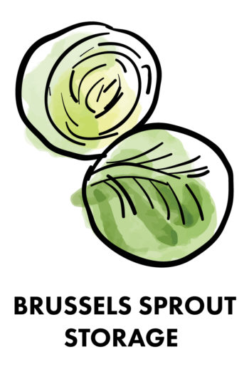 The Best Way to Store Vegetables: brussells sprouts