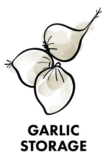 The Best Way to Store Vegetables: garlic