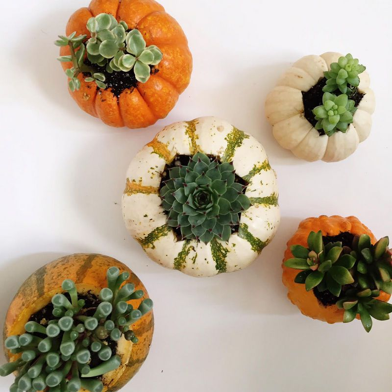 Fall Decoration Ideas - DIY Pumpkin Planters for Succulents