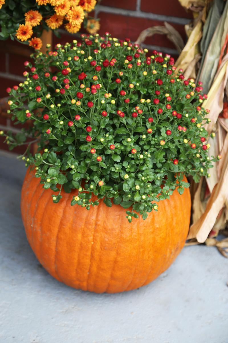 10 ways to decorate a pumpkin under 10