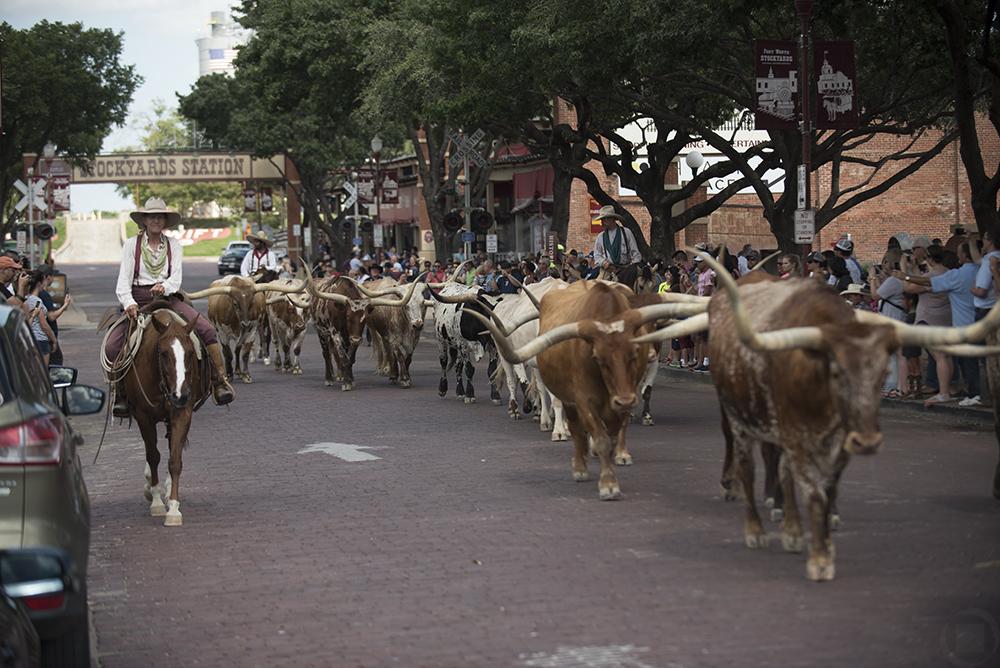 moving to fort worth - stockyard stock exchange livestock