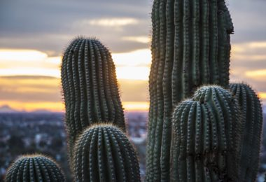 Why moving to Phoenix is a good choice
