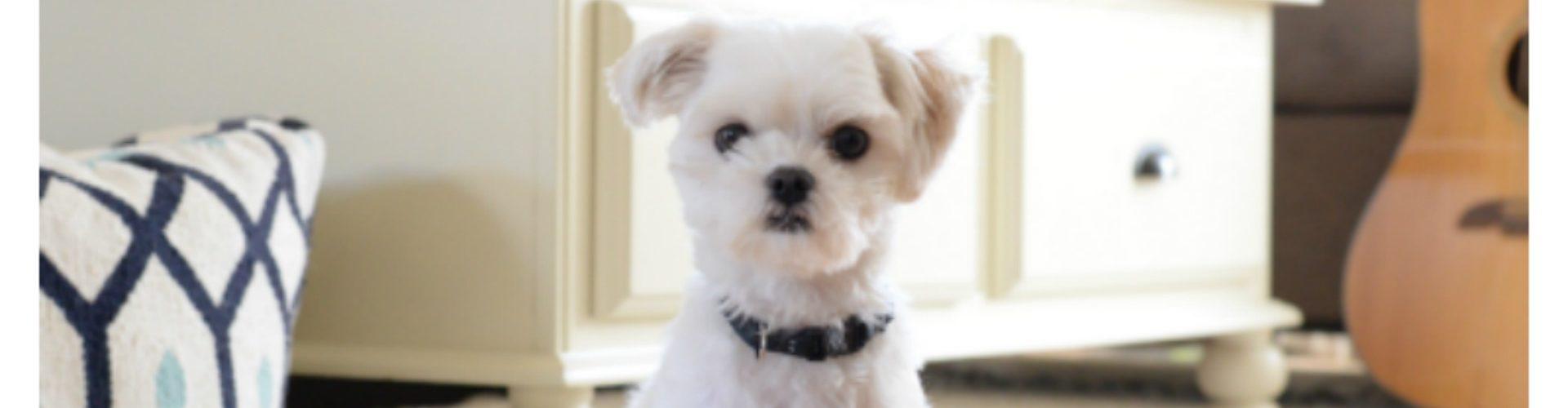 how to organize pet supplies - dog supplies - pet storage