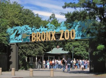 Bronx city for education