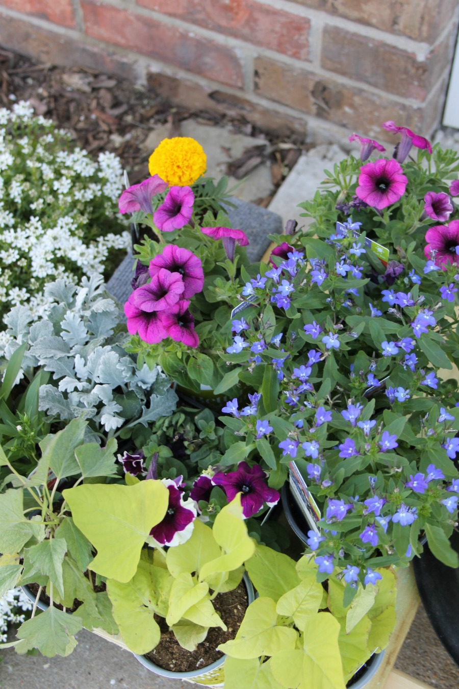 Curb Appeal Ideas - Plant Fresh Seasonal Flowers in Flowerbeds and Boxes