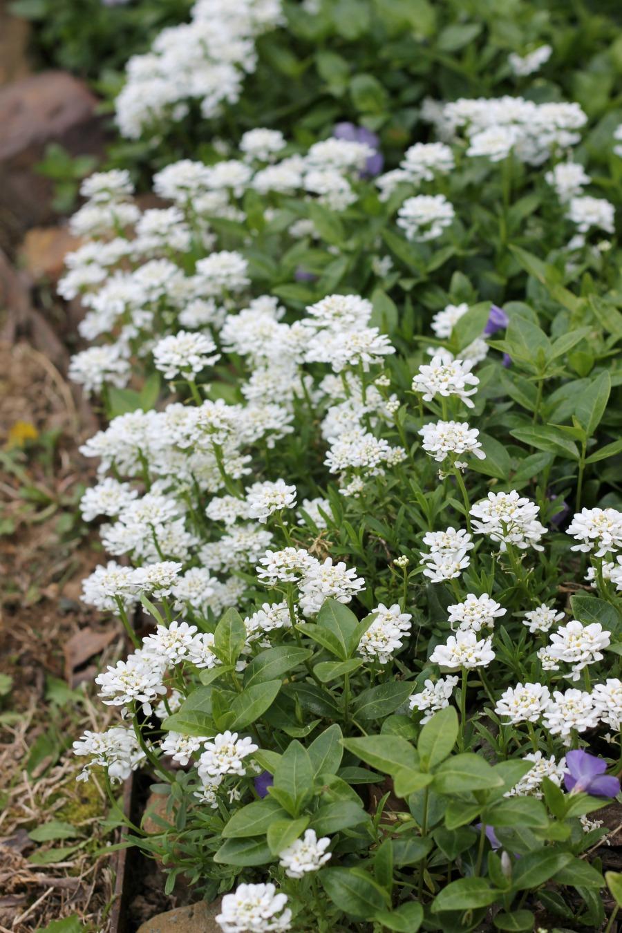 Curb Appeal Ideas - Weed Flowerbeds