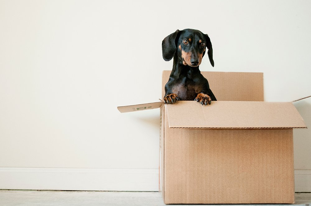 What to Do If You Need Help Moving for Free | Dog inside of moving box